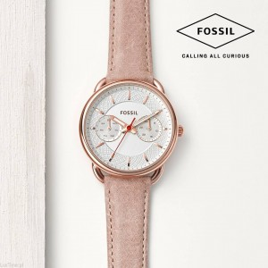 Fossil Tailor